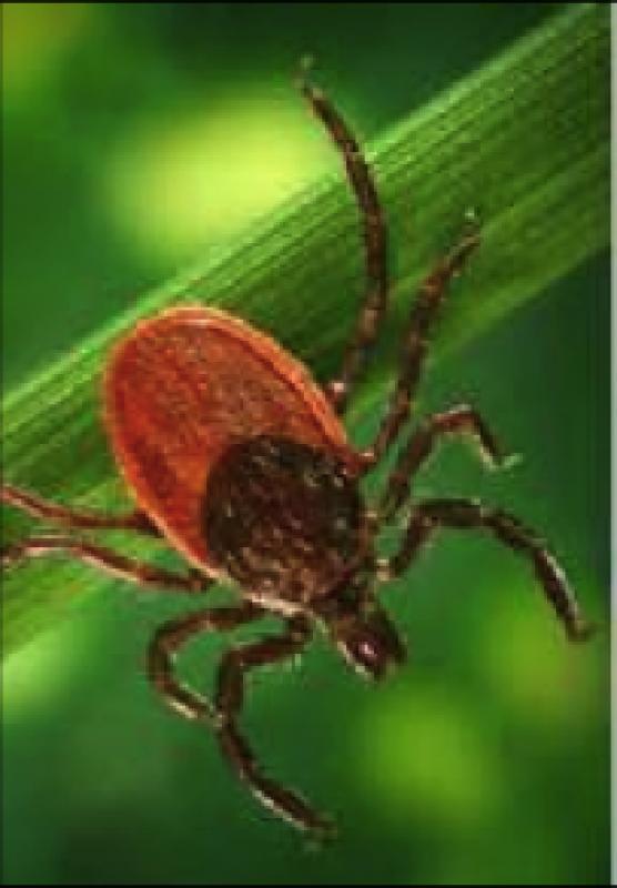Conférence-débat sur la maladie de Lyme 12 mai 2017 à Matzenheim